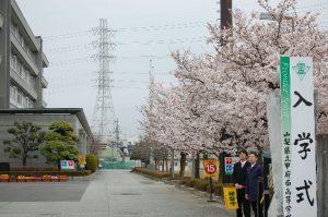 新入生を待つ正門の桜